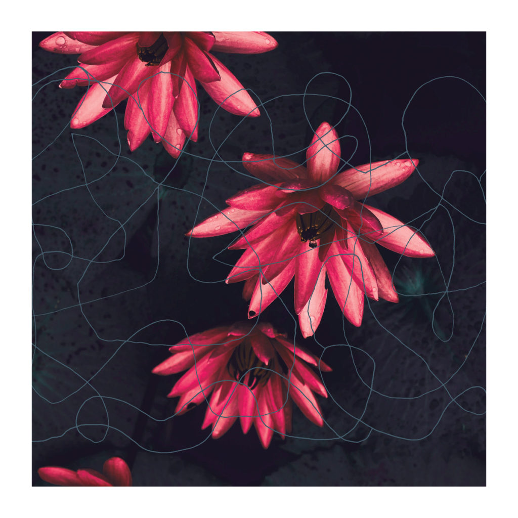 Waterlily, 1.  35 x 35 inches, Rs 1,00,000 [Limited edition of 7]